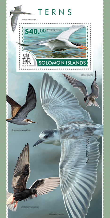Terns - Issue of Solomon islands postage stamps